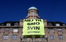 Greenpeace terror