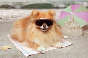 Sommerhund425